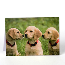 Personalised Pet Greeting Cards